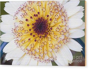 Pot Marigold Citrus Smoothies Wood Print