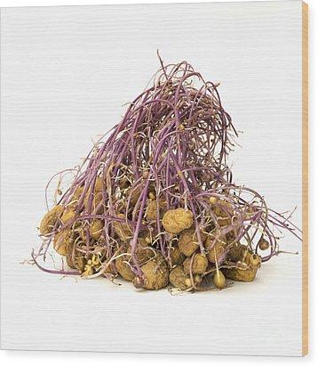 Potato Wood Print by Bernard Jaubert