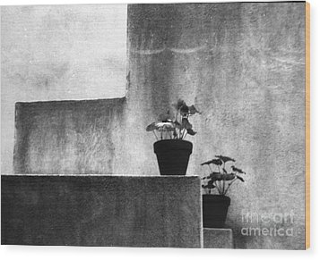 Wood Print featuring the photograph Pots by Steven Macanka
