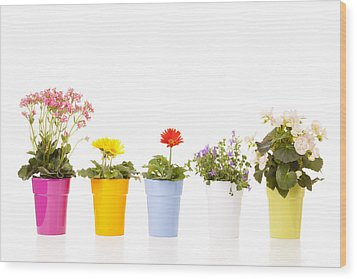 Potted Flowers Wood Print by Alexey Stiop