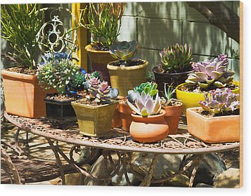 Potted Succulents  Wood Print by Bernard  Barcos