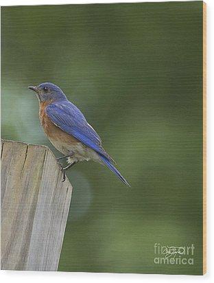 Powder Blue Wood Print by Cris Hayes