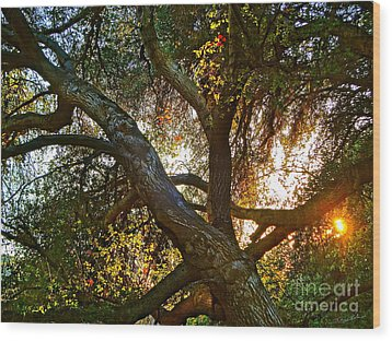 Power Entwined Wood Print by Gem S Visionary