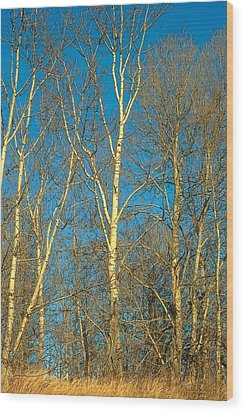 Prairie Autumn 9 Wood Print by Terry Reynoldson
