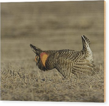 Prairie Chicken-9 Wood Print by Thomas Young