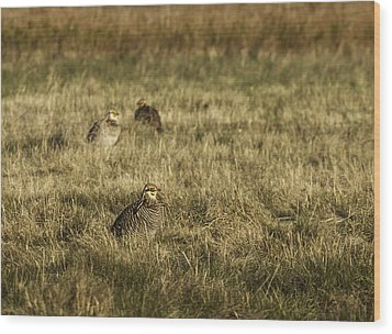 Prairie Chickens After The Boom Wood Print by Thomas Young