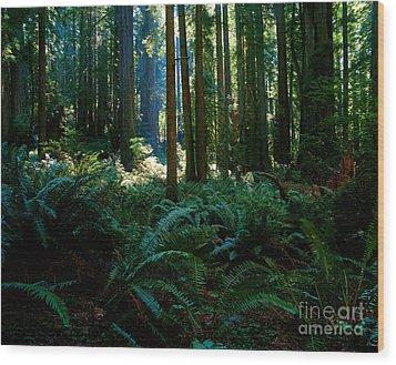 Prairie Creek Redwoods State Park 10 Wood Print by Terry Elniski