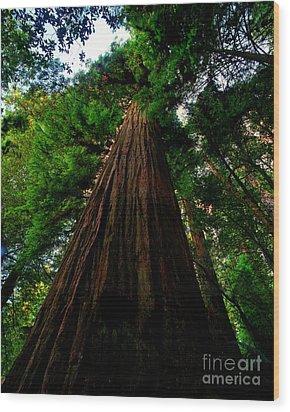 Prairie Creek Redwoods State Park 13 Wood Print by Terry Elniski