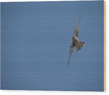 Prairie Diver Wood Print