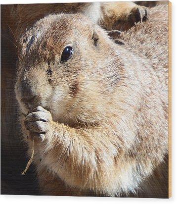 Prairie Dog Wood Print by David G Paul