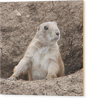 Wood Print featuring the photograph Prairie Dog by Elizabeth Lock