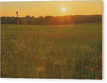 Prairie Flowers With Setting Sun Wood Print