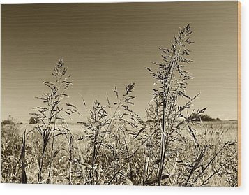 Prairie Grass Wood Print
