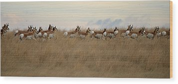 Prairie Pronghorns Wood Print
