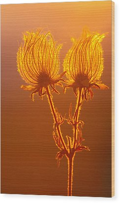 Wood Print featuring the photograph Prairie Smoke by Judi Baker