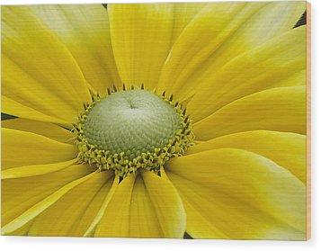 Prairie Sun Wood Print
