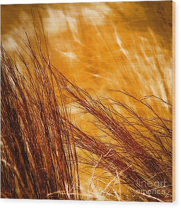 Wood Print featuring the photograph Prairie Winds by Catherine Fenner