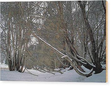 Prairie Winter 2 Wood Print by Terry Reynoldson