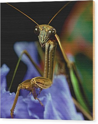 Praying Mantis  Closeup Portrait 3  On Iris Flower Wood Print by Leslie Crotty
