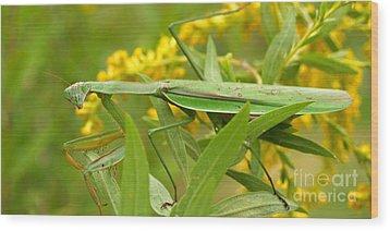 Praying Mantis In September Wood Print by Anna Lisa Yoder