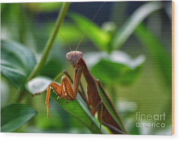 Wood Print featuring the photograph Praying Mantis by Thomas Woolworth