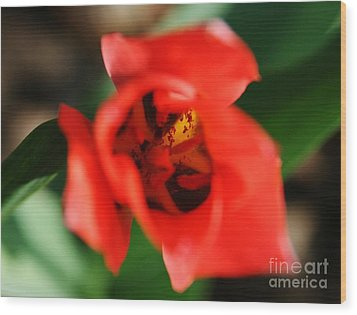 Pre-pollination  Wood Print by Neal Eslinger