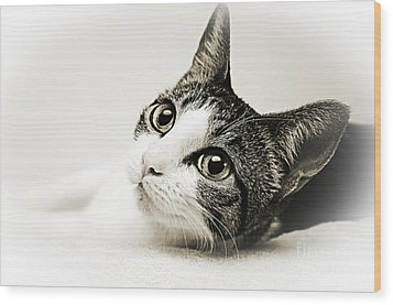 Precious Kitty Wood Print by Andee Design