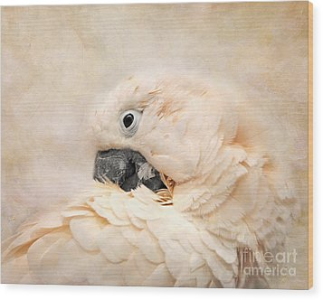 Preening Wood Print by Jai Johnson