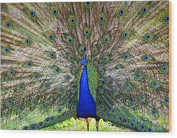 Pretty As A Peacock Wood Print by Tony  Colvin