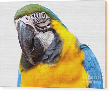 Wood Print featuring the photograph Pretty Bird by Roselynne Broussard