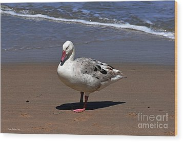 Wood Print featuring the photograph Pretty Goose Posing On Monterey Beach by Susan Wiedmann