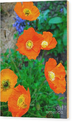 Pretty In Orange Wood Print by Jacqueline Athmann