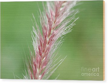Wood Print featuring the photograph Pretty In Pink by Bianca Nadeau