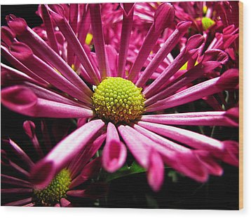 Wood Print featuring the photograph Pretty In Pink by Greg Simmons