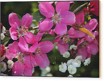 Pretty In Pink I Wood Print by Aya Murrells