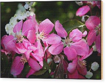 Pretty In Pink Iv Wood Print by Aya Murrells