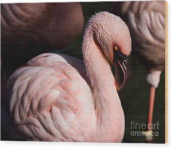 Pretty In Pink Wood Print by Lisa L Silva