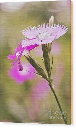 Pretty In Pink Wood Print by Pamela Gail Torres