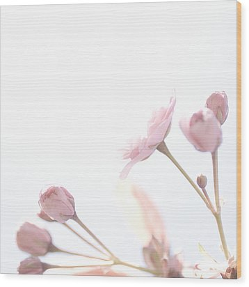 Wood Print featuring the photograph Pretty In Pink - The Dreamer by Lisa Parrish