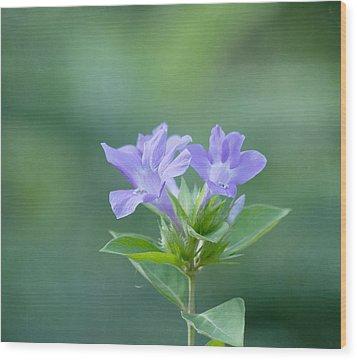 Pretty In Purple Wood Print by Kim Hojnacki