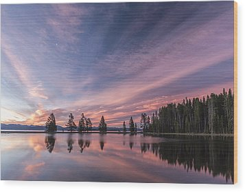 Pretty Is Pink Wood Print by Jon Glaser
