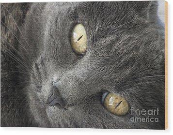 Pretty Kitty Eyes Wood Print by Darleen Stry