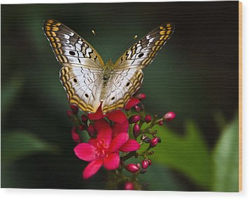 Pretty Little Butterfly  Wood Print by Saija  Lehtonen