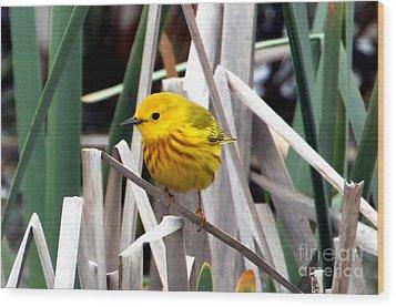 Pretty Little Yellow Warbler Wood Print by Elizabeth Winter