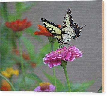 Wood Print featuring the photograph Pretty On Pink by Lorna Rogers Photography