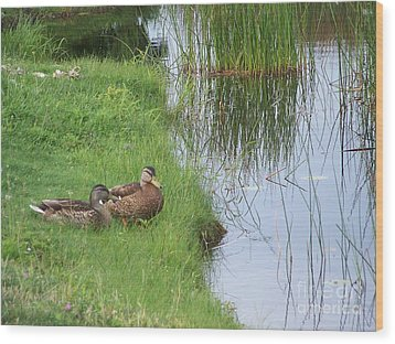 Mated Pair Of Ducks Wood Print