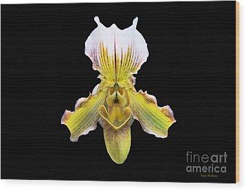 Pretty Paphiopedilum Orchid Ver. 2 Wood Print by Susan Wiedmann