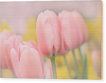 Pretty Pastel Pink Tulip Flowers Wood Print by Jennie Marie Schell