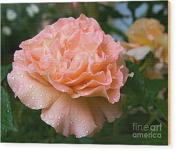 Pretty Peach Peony Flower Wood Print
