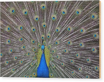 Pretty Peacock Wood Print by P S